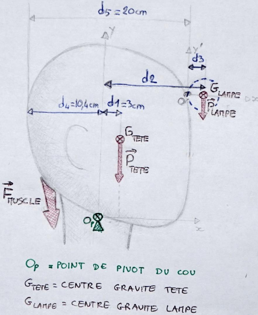 Schéma biomécanique